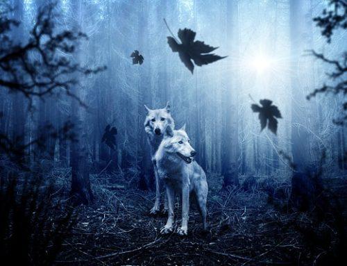 PIC in DONDES uspešna zoper odstrel volkov