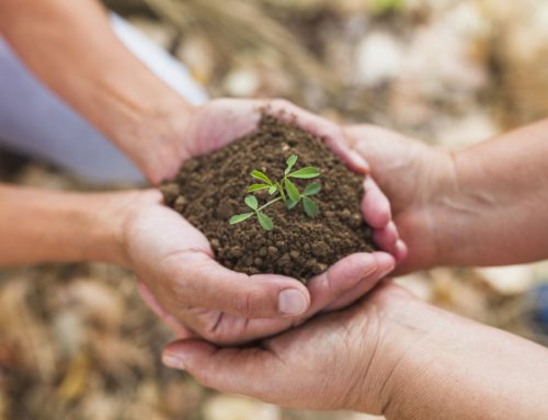 Okolje je tudi v vaših rokah – lahko vam pomagamo z Zeleno svetovalnico!