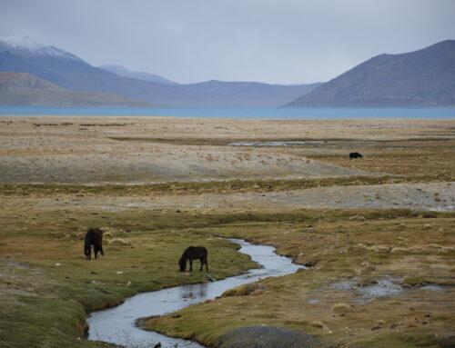 Analiza presoj vplivov predpisov na okolje in podnebje