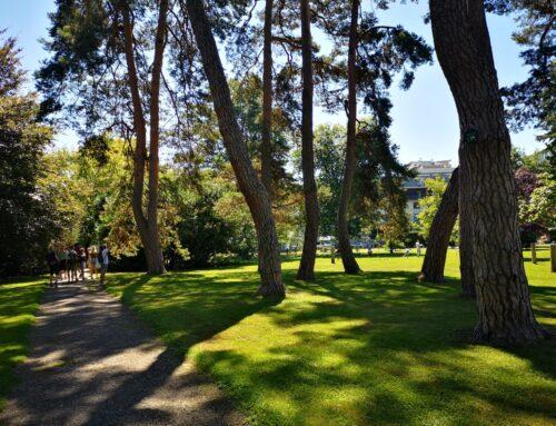 Veliko zanimanje in skrb za mestna drevesa.